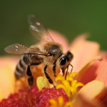 How We Can Stop Bees Dying in Atlantic Canada
